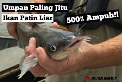 umpan Ikan patin liar di sungai & danau