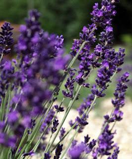 Le Reve Organic Spa & Boutique lavender skincare