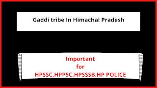 Gaddi tribe In Himachal Pradesh