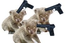 Trois koalas en sursis
