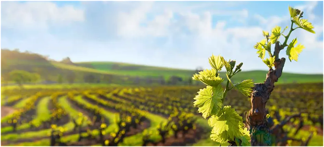 Interesting Facts About Wines of Western Australia