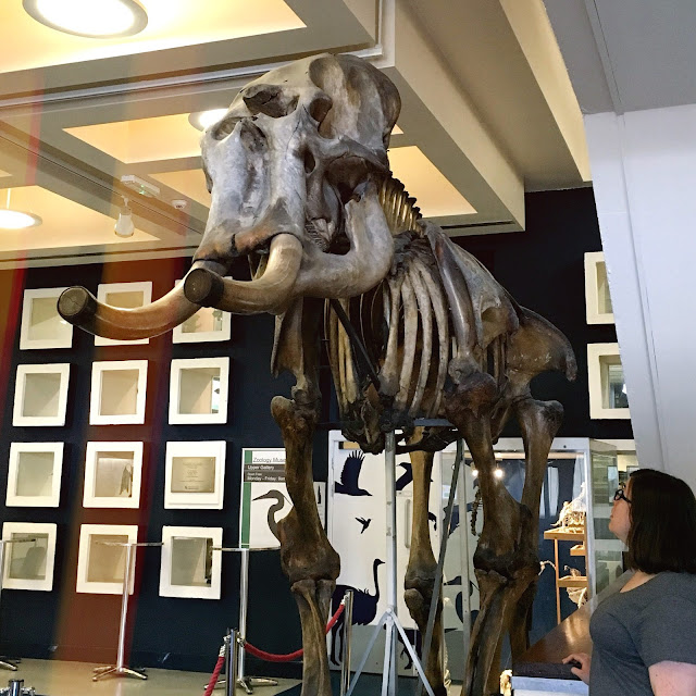 10 things to do in Aberdeen - Zoology Museum