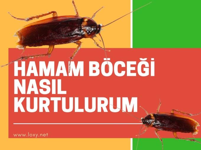 Hamam Böceğinden Nasıl Kurtulurum?
