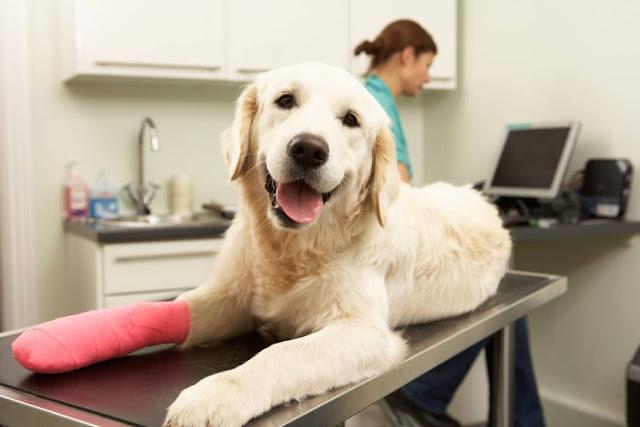 Pet Health Care Coverage