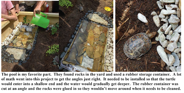 Quarantined Projects, Turtle Habitat