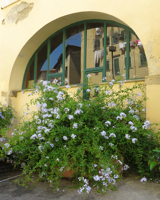Windows flower, Via Strozzi, Livorno