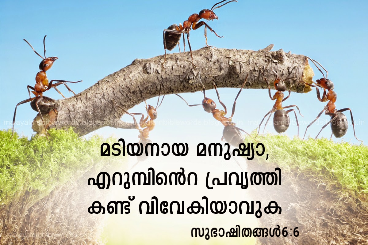 Malayalam Bible Words Bible Quotes Related To Ants Bible