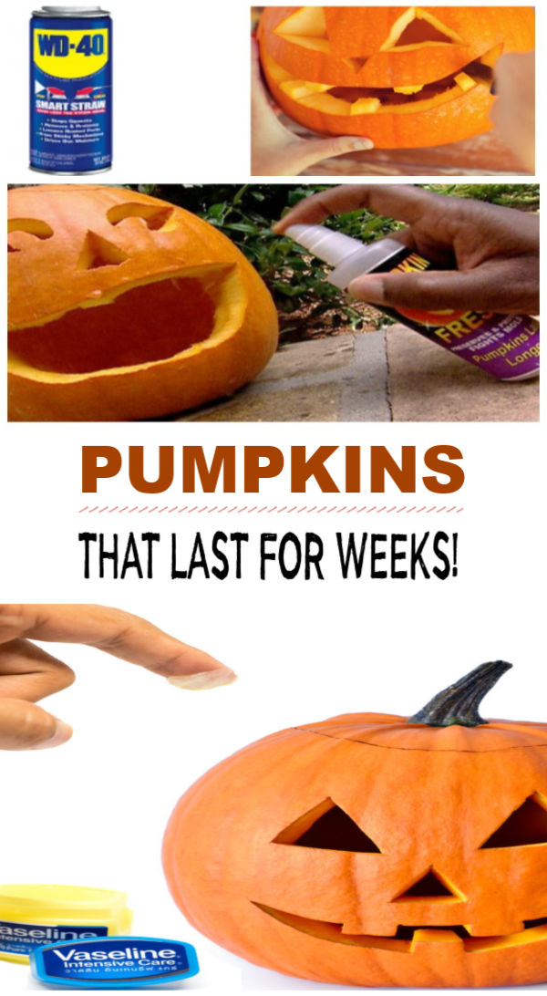 Tips and tricks for preventing pumpkins from rotting.  Carved pumpkins will last weeks longer with these hacks! #pumpkincarvingideas #pumpkinpreservation #pumpkinrottingprevent #waystokeeppumpkinsfromrotting #keepcarvedpumpkinsfresh #pumpkintips #pumpkincarvingtips #pumpkinhacks #halloweenactivities #growingajeweledrose