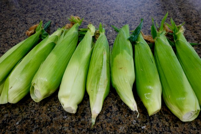 Corn cobs with husks