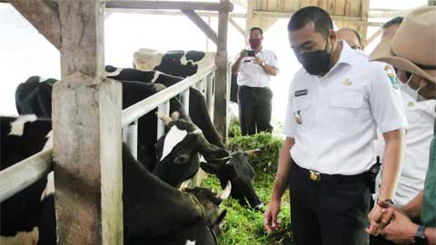 Audy Joinaldy meninjau unit pengolahan susu Kelompok Tani Permata Ibu