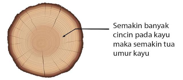 Cincin lingkaran umur kayu