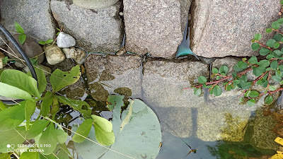 jeziorko w ogrodzie