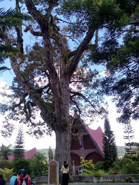 Pohon Durian Tarutung Tapanuli Utara