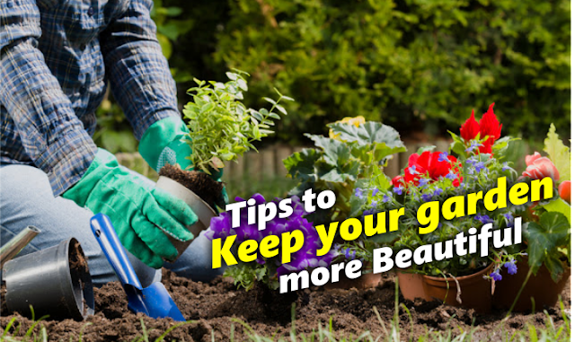 Here are 5 practical tips to keep your garden more beautiful !