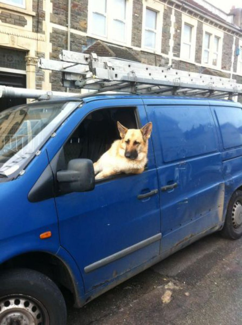 40 Cool Dogs Driving Cars 40 Pics Amazing Creatures