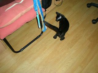 Serpiente de juguete para gatos