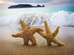 Bir Deniz Yıldızı Hikayesi 9