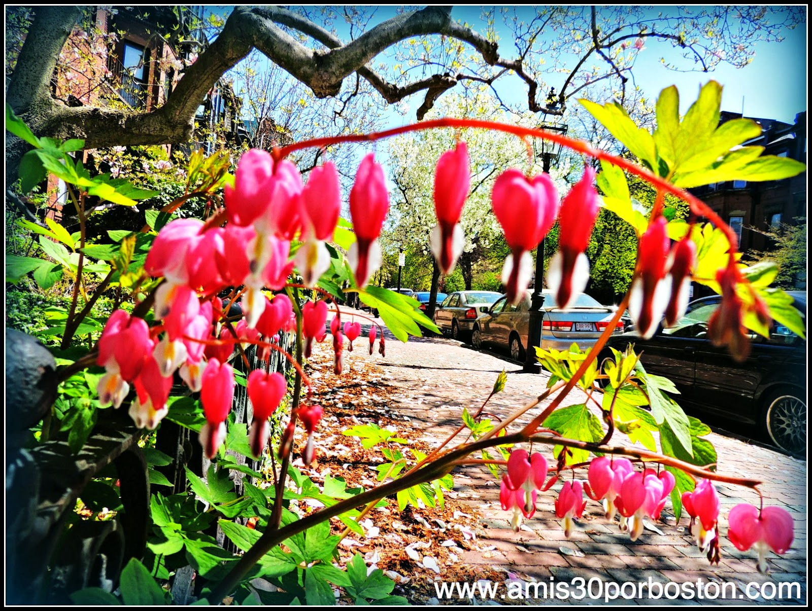 Primavera 2014: Bleeding Heart