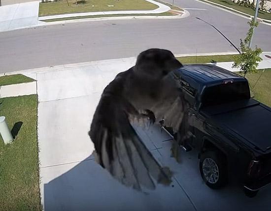 Vídeo de pássaro levitando - Img 2