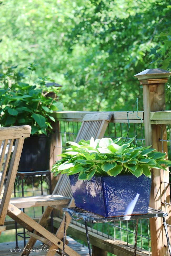Set potted plants on risers or metal tables to prevent water damage to wood decks