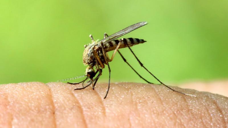 Δεν εμπνέουν ανησυχία τα κρούσματα του ιού του Δυτικού Νείλου που εντοπίστηκαν στον Έβρο