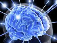 Fakta Medis Tentang Otak yang Penting Untuk Kita Ketahui