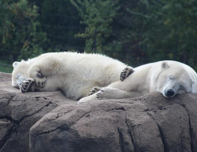 Kulu and his mom sleeping on the big rock