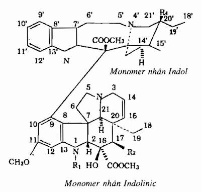 Thành phần hóa học Dừa cạn-Catharanthus roseus-Nguyên liệu làm thuốc Hạ Huyết Áp