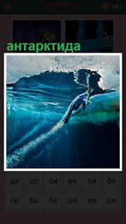 под водой в Антарктиде плывет пингвин под льдами