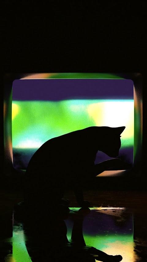 Hình Bóng Chú Mèo