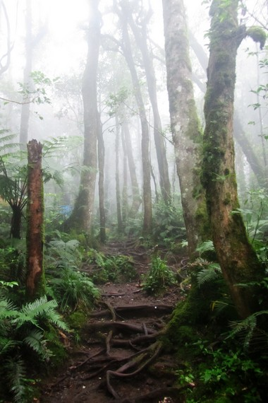 Exploring the Tropical Rainforests of Mount Gede Pangrango