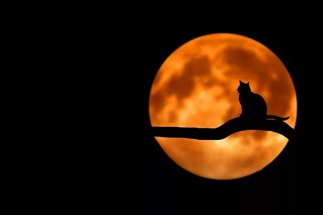 beautiful cat on the night tree