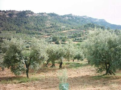 La pileta, camino, pantano de Pena, embalse, finca, almendros, olivos 16
