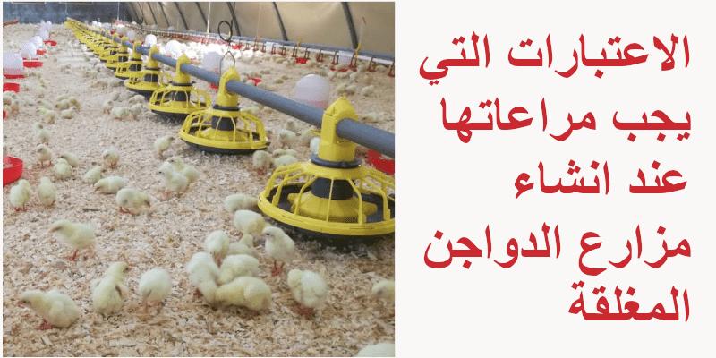 الاعتبارات التي يجب مراعاتها عند انشاء مزارع الدواجن المغلقة