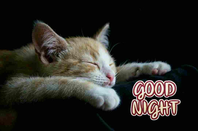Best Good Night sleeping cat Images, Photos, Greetings and HD Pictures