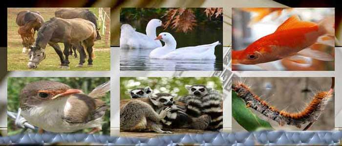 Pengelompokan Binatang Dari Simetri dan Lapisan Tubuh