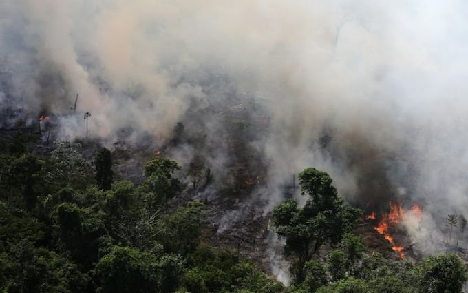 Amazon rainforest is burning at an unprecedented rate