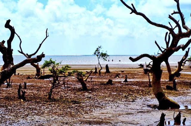 Bichitrapur Mangroves Forest Balasore
