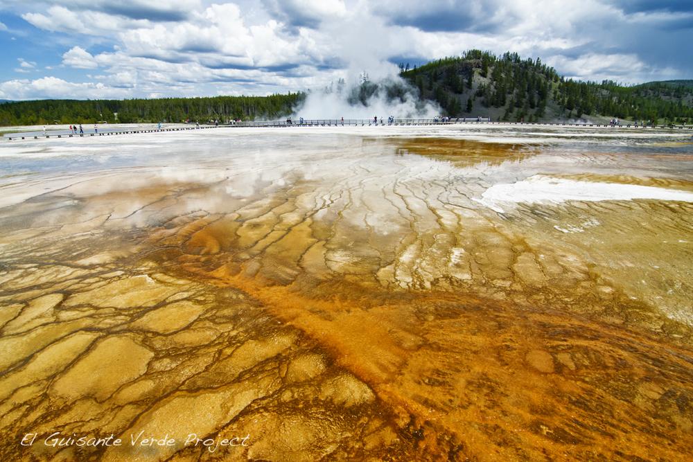 Q Es Un Bisonte Parque Nacional Yellow...