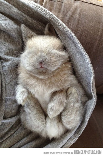 Adorable gorgeous bunny asleep in basket