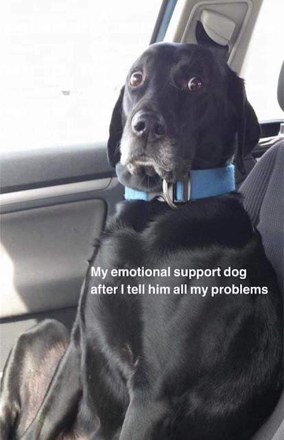 emotionalsupport-reddit.jpg