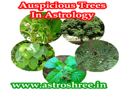 which trees are lucky for home garden