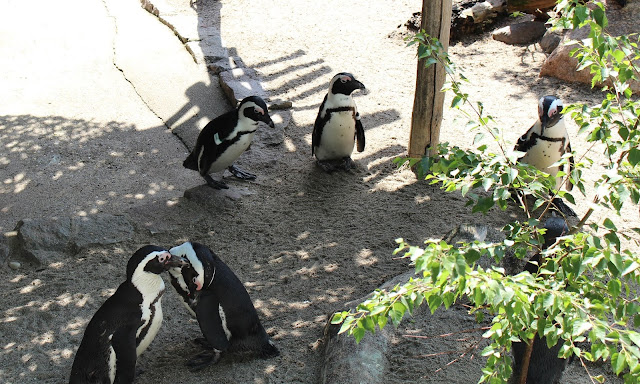 Zoo Leipzig Pinguinen