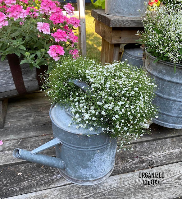 Photo of a watering can with baby's breath