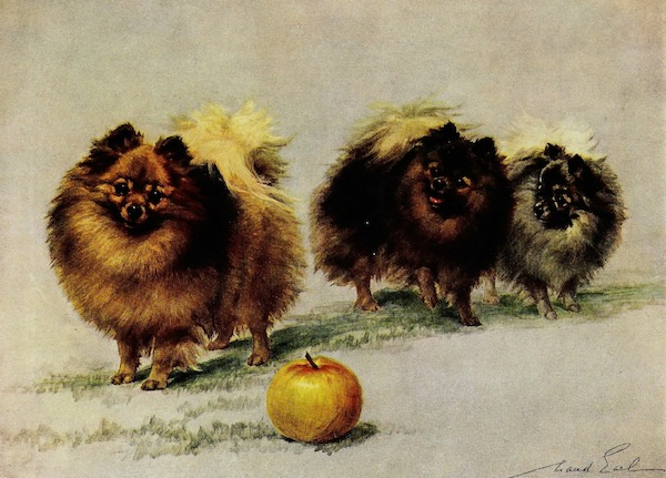 Painting of three Pomeranians