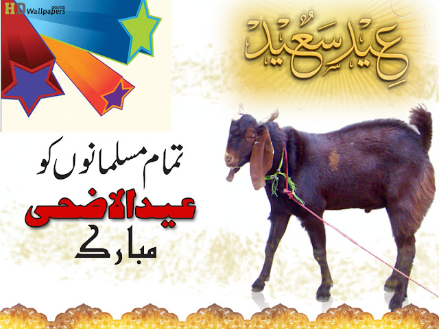 Bakra Eid Pictures HD Photos High Quality Images