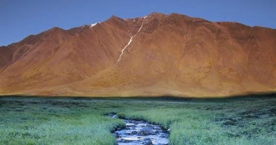 150 Degrees Celsius To Fahrenheit >> Plant Life: Arctic Tundra