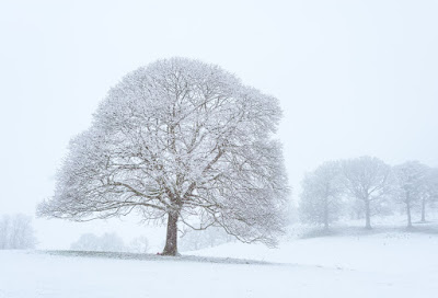 Frozen trees in a field of snow. Lake District National Park, UK. By Click & Learn Photography.