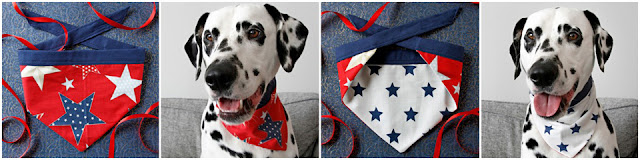 Smiling Dalmatian dog modelling a reversible DIY dog bandana with stars