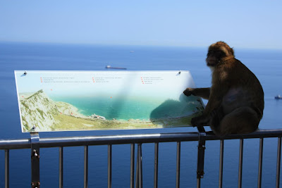 Ape in Gibraltar